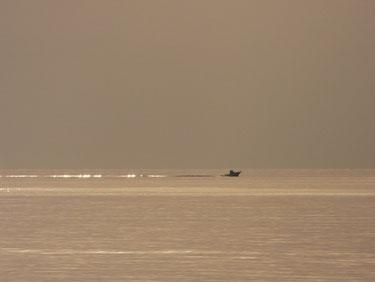 船の引き波もキラキラ