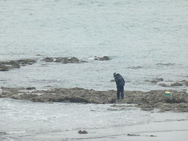 今日も潮が引いた時間は海の恵み収穫してる人居ましたよ~