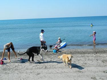 わんこも初めは海に入らないつもりで洋服着たご近所のちびっ子達も最後はびしょぬれ~~(笑) 楽しかったね!