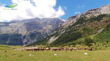 Llanos de Lalarri.