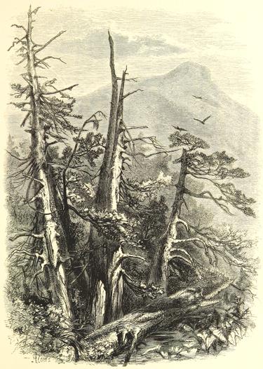Historisches Symbolbild Wald