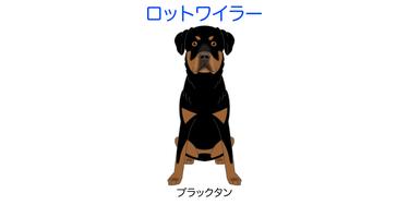 画像をクリックorタップで犬種イラスト全紹介-②ハ行へ移動