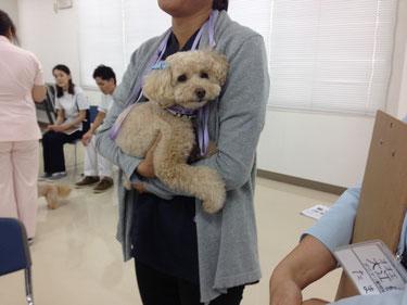 実習で子犬の役をしています。かの子は抱かれて、ご満悦^^@