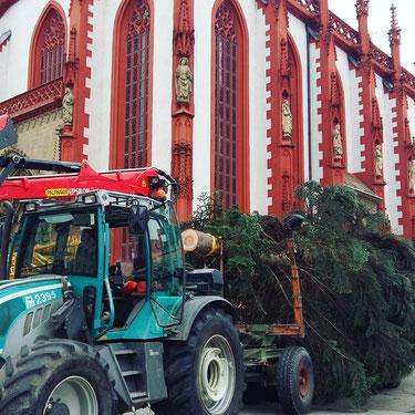 Der Weihnachtsbaum in Würzburg vor der Marienkapelle