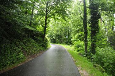 Der dicht bewachsene Weg führt zur Burg