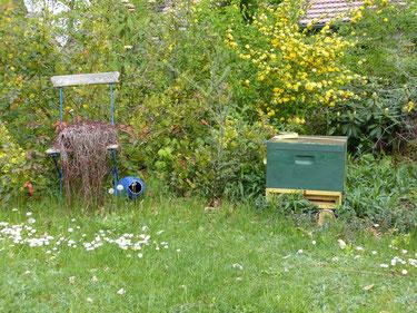 Bienenvolk in einem toll gestalteten Garten in Magdeburgerforth.  Wie hier fanden die Honigbienen der Imkerei Ökohof Fläming in drei weiteren schönen Gärten ein neues Zuhause.