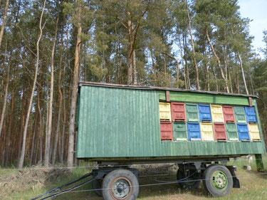 Bunte Bienenbeuten und Bienenstöcke auf dem Bienenwanderwagen der Imkerei Ökohof Fläming. Hier sitzen die Honigbienen wie in der Bio-Imkerei gewöhnlich in Holzkästen. Der Wagen istgeschützt am Waldrand aufgestellt. Hier sammeln die Bienen Honig.