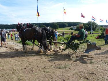 Bei der PferdeStark 2015 werden zahlreiche landwirtschaftliche Geräte für Pferde gezeigt. Hier ist ein Zweigespann vor einen relativ schweren Pflug gespannt. Dieses ist nun auf dem Weg zur Vorführung.