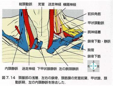 頸部の構造