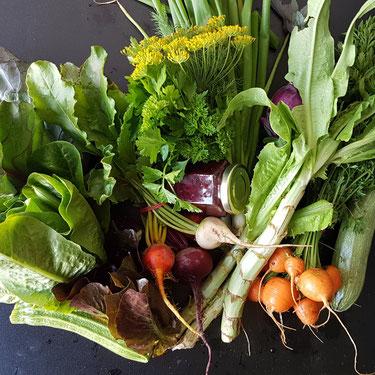 Gelbe Bete, Strunksalat, Dillblüten, Karotten mit Karottengrün im Juli