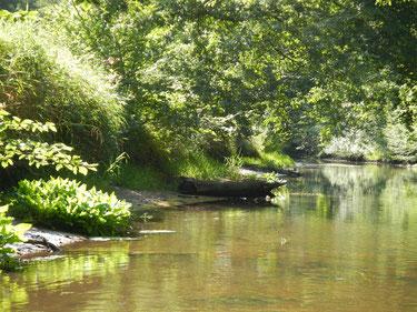 Ufer als Übergangsbereich