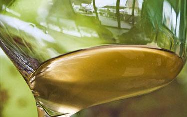 Silvaner im Weinglas. Der Wein zum Spargel.