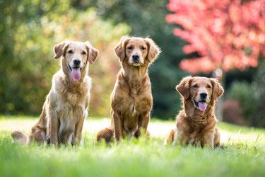 v.l.n.r. Ginger,  Maven und Enya (+20)