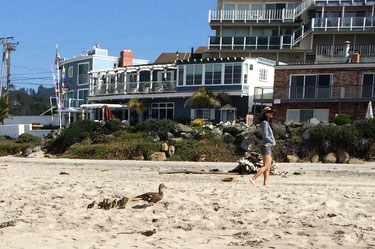 Ducks on Rio Del Mar Beach