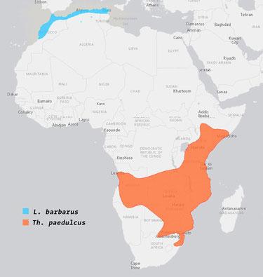 Verbreitung barbarus paedulcus