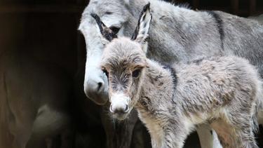 ezel geboren dierenpark amersfoort