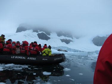 アザラシ発見の情報が流れ、ボートで現場へ急行