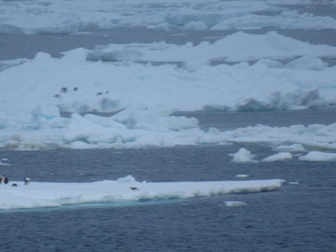 大量の氷山の間を行く