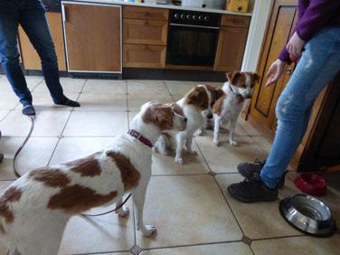 Familientreffen: Amy, Janne und Ginny vom Strithorst