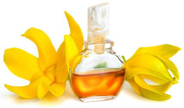 myRefan Parfümerie und Kosmetik - Ylang- Ylang Duft