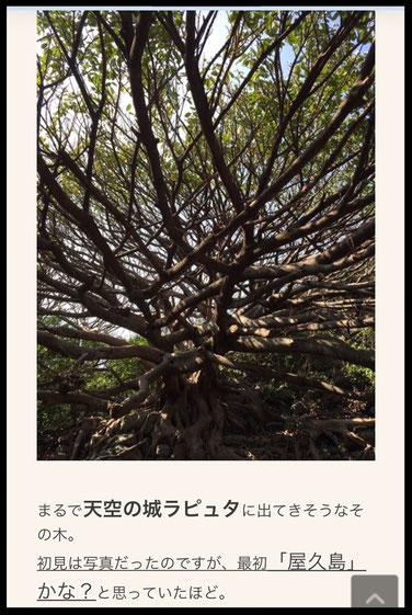 2016年03月22日  「アコウの木」記事より