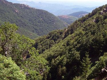 Gorges du Tarn (82)