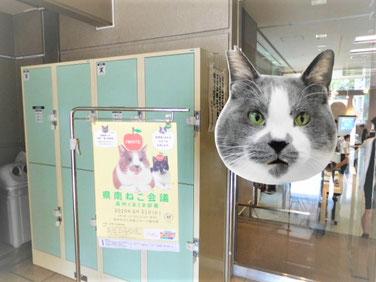 一関保健所 主任獣医師 岩井佳子さん