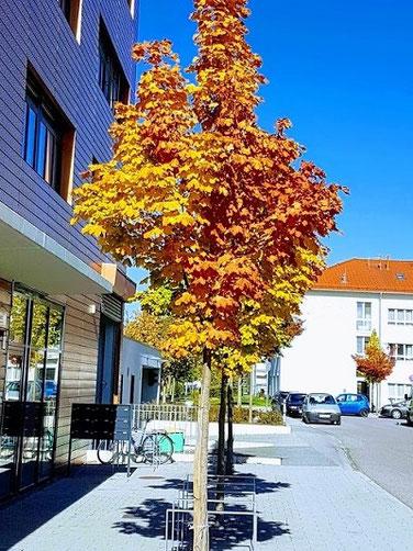 Baumsubstrat gemäß FLL 2