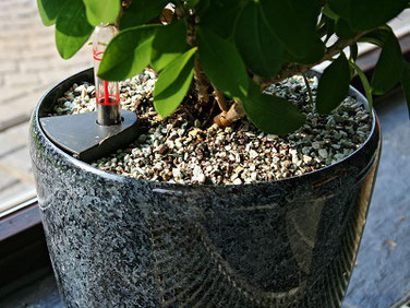 Vulkastrat, Kultursubstrat für Gartenpflanzen