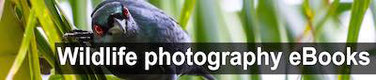 Free Wildlife and birds photography ebooks