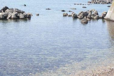 岩場に住むバフンウニ