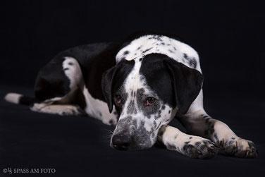 Hunde-Portraits