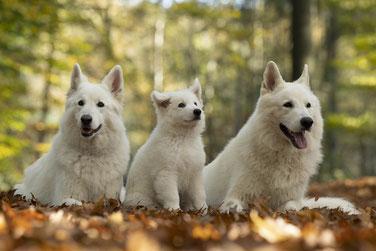 Dayo, Yuma und Crisby