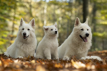 Dayo, Yuma und Crisbee