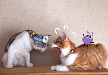 イメージ写真:医者の格好をした猫と治療をうける猫