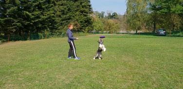 hundefrisbee, dog, Frisbee