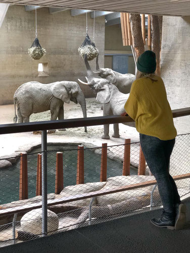 Kate unterwegs... im Zoo Basel