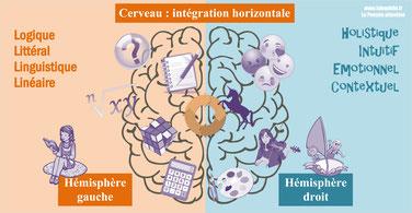 Cerveau: INTEGRATION HORIZONTALE d'après le Dr SPIEGEL