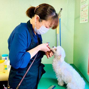 アトリエポム富松Pets トリマーによるグルーミング
