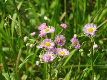 春紫苑(はるじおん) 散策路 190414撮影 738