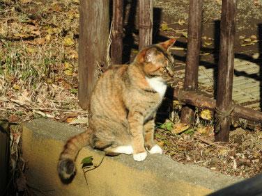 猫 三溪園 161202撮影 40