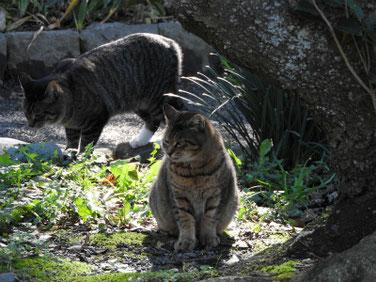 猫 三溪園 161202撮影 35