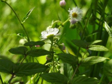 春紫苑(はるじおん)散策路 210411撮影 1317