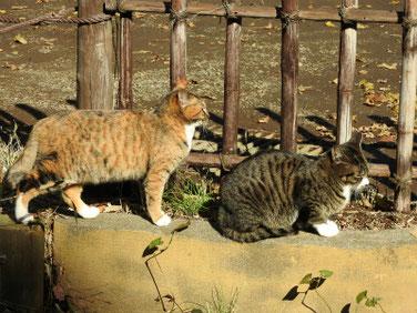 猫 三溪園 161202撮影 36