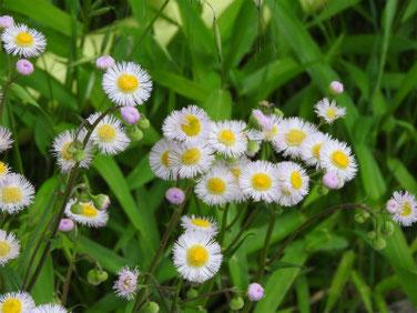 春紫苑(はるじおん) 散策路 190421撮影 802