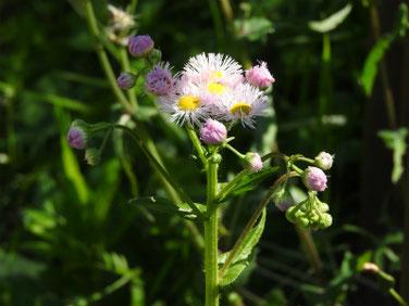 春紫苑(はるじおん)散策路 210411撮影 1319