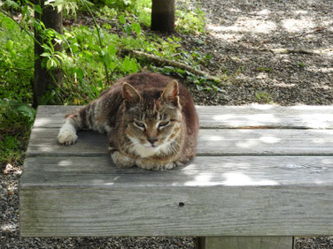 猫 三溪園 大池 160617撮影 6