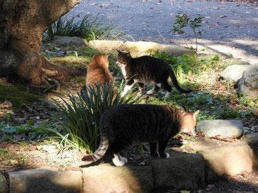 猫 三溪園 161202撮影 37