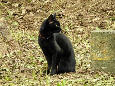 黒猫(くろねこ) 散策路 210908撮影 651