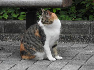 三毛猫 散策路 170626撮影 100
